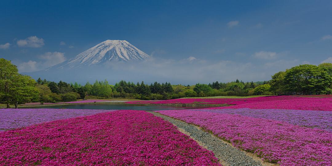 富士山和河口湖