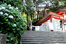 Enjoy Enoshima all day! This money-saving pass combines a discounted round-trip ticket with Enoshima sightseeing.