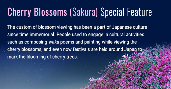 Cherry blossoms (sakura) feature