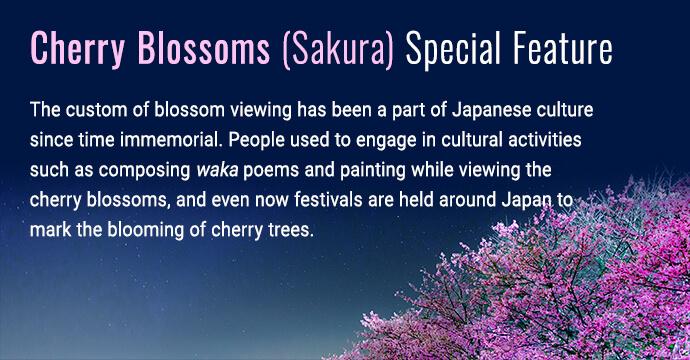 Cherry blossoms (sakura) feature