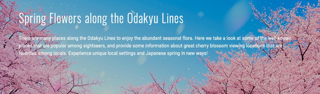 Spring Flowers along the Odakyu Lines