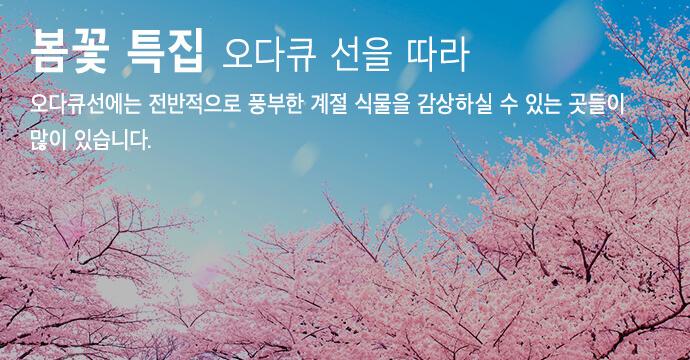 봄꽃 특집 오다큐 전철 주변