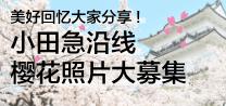 http://小田急沿线樱花照片大募集