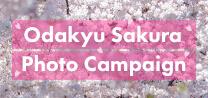 http://sakura%20photo