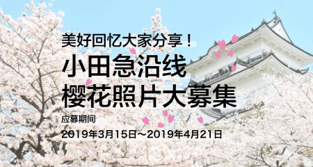 小田急沿线樱花照片大募集