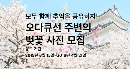 오다큐선 주변의 벚꽃 사진 모집