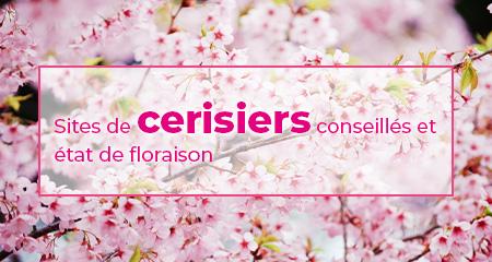Sites de cerisiers conseillés et état de floraison