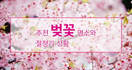 추천 벚꽃 명소와 절정기 상황