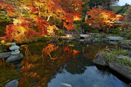 長谷寺 彩燈點亮紅葉