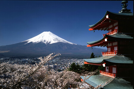 아라쿠라야마 센겐 공원 벚꽃 축제
