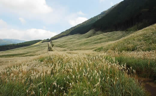 Sengokuhara and Pampas Grass fields