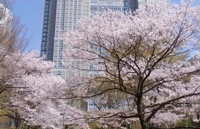 신주쿠 중앙공원