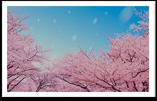小田急沿線 春之花特輯