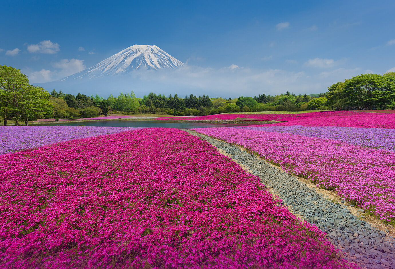 Région du Mont Fuji et du Lac Kawaguchi