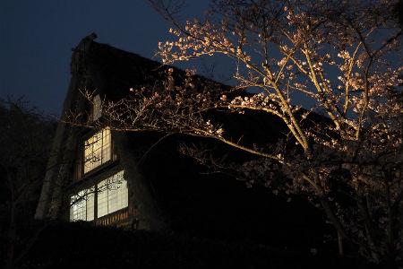 밤의 민가원